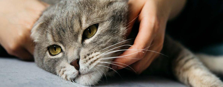 como sacar pelos de gato del sofa de forma sencilla