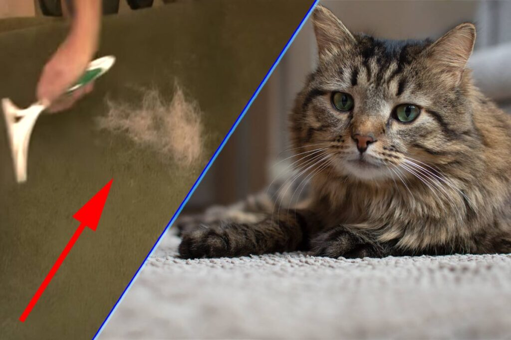 método sencillo para quitar el pelo de gato en la alfombra